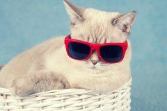 ま~るい背中はカッコ悪い!ストレッチで猫背を治して、むくまない身体へ!