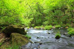 硬水と軟水はどう違う?水の種類ごとの特徴を比較