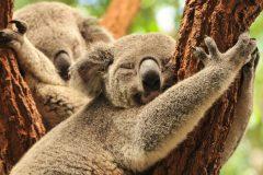 オーストラリア留学について【生活情報】ご紹介