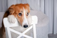 ドッグフード「アランズNATURAL DOG FOOD(ナチュラルドッグフード)」ってどうなの?価格は?評価は??