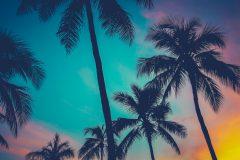 大人気♡ハワイ留学の魅力・必要なビザや費用・生活情報についてご紹介