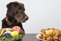 やっぱりドッグフードも無添加やオーガニックがいいの?愛犬のための選び方