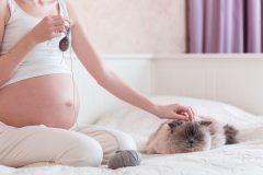 猫からトキソプラズマ症に感染!?妊婦は猫を飼ってはいけないってホント?