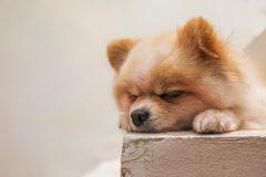 ごはん食べなくなった時の対処法!愛犬にとって本当においしいドッグフードって?