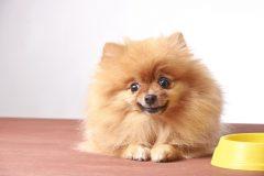 ソフトドライタイプのドッグフードは危険なの?愛犬のために知っておきたいこと