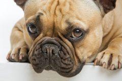愛犬のためにきちんとチェック!ドッグフードの賞味期限って?表示の見方は?