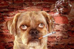 禁煙時の行動療法で吸いたい気持ちをごまかす!
