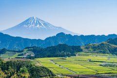 静岡県のふるさと納税の人気の品が一目でわかる!一番人気は?