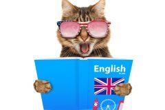 大手英会話スクールならではの安心感が魅力!オンライン英会話【ジオス】