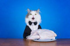 キャットフードは肉か魚どっちがいい?チキンが原材料のものがいいって本当?