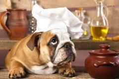 手作りのごはん?それともドッグフード?愛犬のためにはどっちがいいの??
