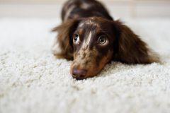 小型犬のドッグフードの選ぶポイントは?おすすめのドッグフードはコレ!
