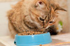 老猫がなりやすい病気とは?シニア専用のキャットフードはいつから与える?