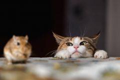 ずっと健康でいてほしい!猫に必要な栄養成分とキャットフードの選び方とは?