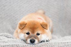 子犬(パピー)のドッグフードを選ぶポイントをご紹介!