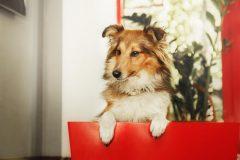 中型犬のドッグフードを選ぶポイントとは?