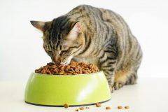 猫のキャットフードを入れる餌皿の選び方とは?おすすめのエサ入れを紹介!