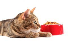 猫がキャットフードを食べない!?食欲不振の原因や対処法は?