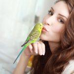 妊婦は鳥との接触に注意!鳥から人へ感染する「オウム病」とは?