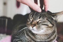 日本の猫に合わせたキャットフード「ホリスティックレセピー」の評判は?