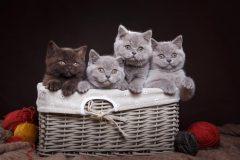 猫用「ファーストチョイス」の成分や価格は?評判はどうなの?