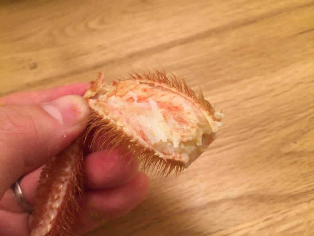 繊細で上品な毛蟹