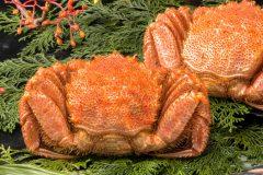 大晦日・正月に蟹食べる人必見!カニ通販の年末年始営業はいつまで?