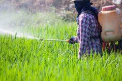 青汁に入っている農薬はやっぱり危険?無農薬と有機栽培の違いとは?