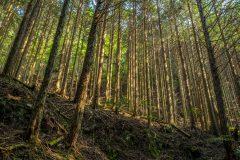 山林地経営をする時に気をつけたいポイント総まとめ