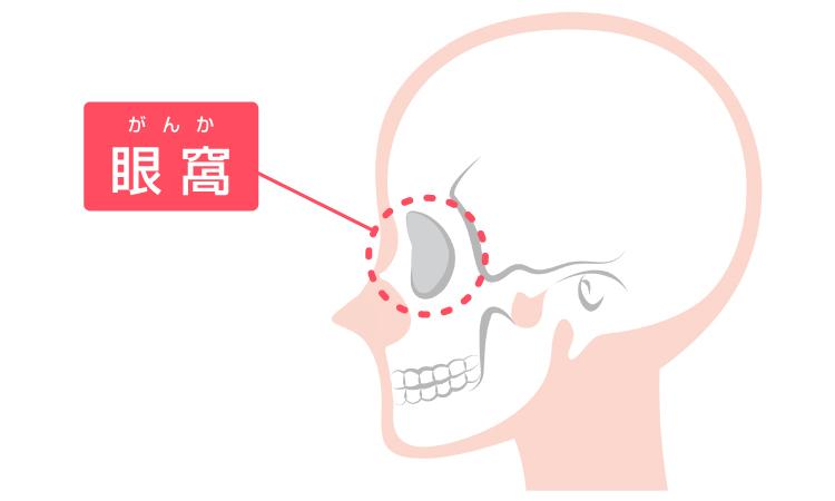 眼窩の説明図