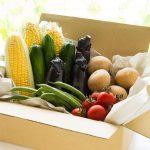 野菜宅配のおすすめ業者5選!有機野菜や無農薬野菜を扱う業者はどこ?