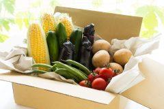 野菜宅配のおすすめ5選!有機・無農薬野菜を取り扱う業者はどこ?