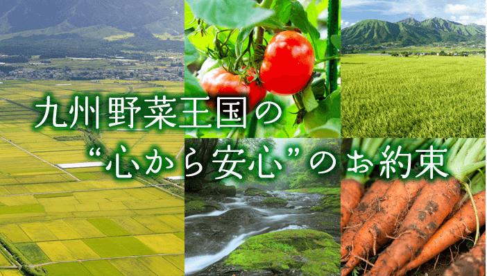 九州野菜王国 おすすめ