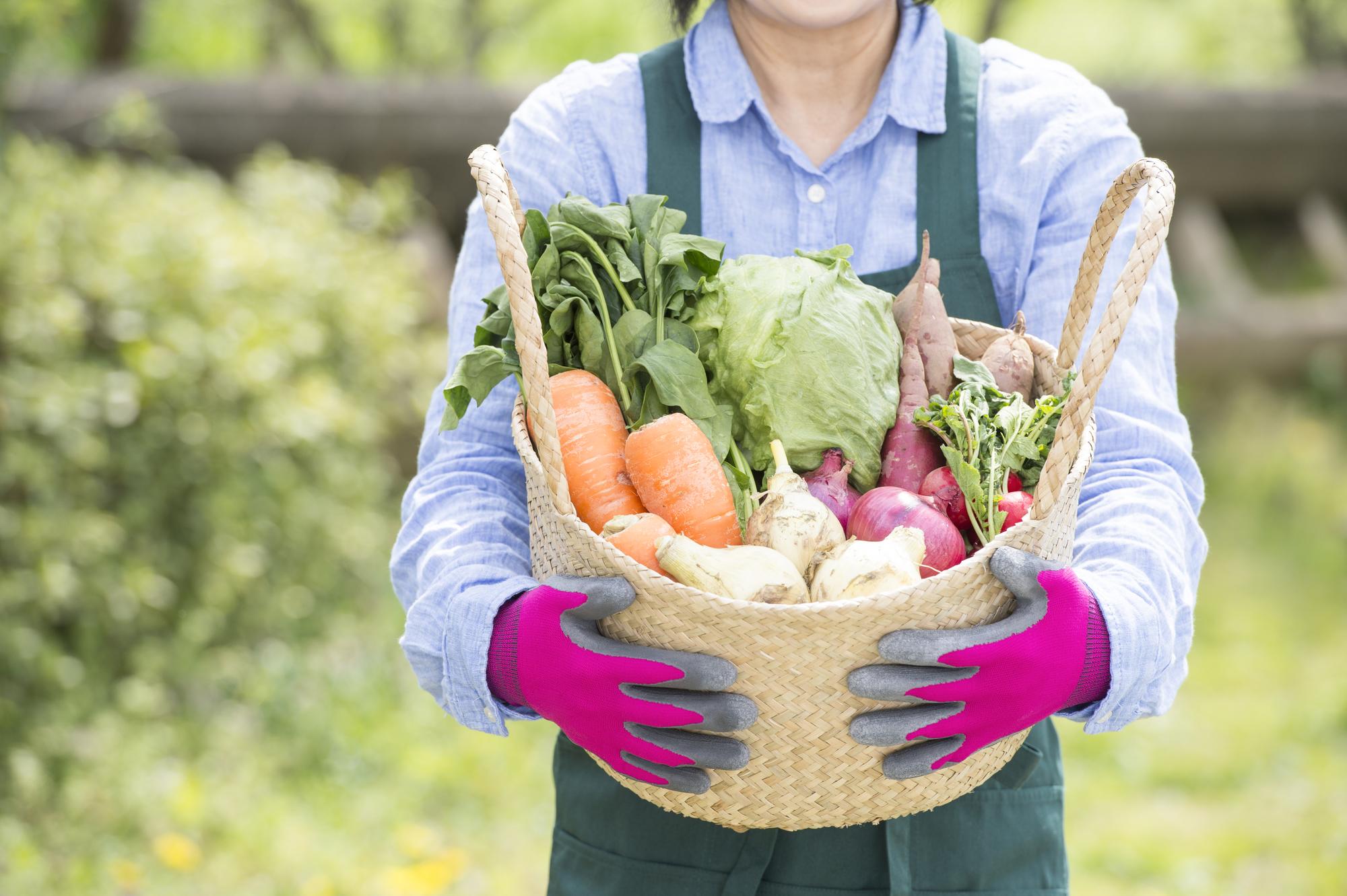 安全性の高い野菜を食べたい!西日本・九州の野菜を扱う宅配業者5選