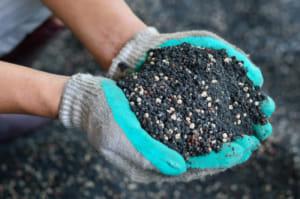 肥料は与えるべき?