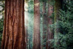 松の樹皮エキスのピクノジェノールとは