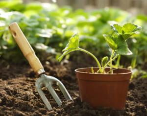鉢植え(プランター)か地植えではどっちがいいの?